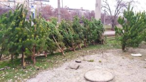 В центральной части Запорожья организовали незаконный елочный базар