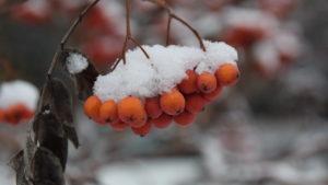 Сказочная красота: Запорожье засыпало первым снегом, – ФОТОРЕПОРТАЖ