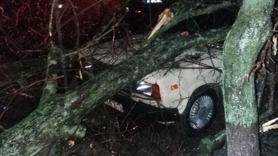В Мелітополі впавше дерево заблокувало проїжджу частину