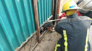 В Мелитополе ротвейлер застрял в калитке: собаку освободили спасатели, — ФОТО