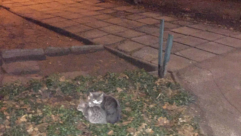 Голова ОСББ в Запоріжжі викинула на вулицю котів, — ФОТО