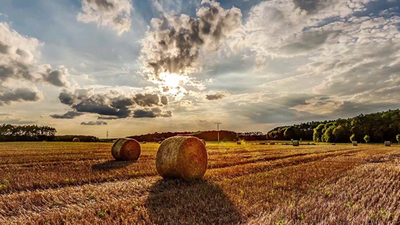 В шаге до рынка земли: сколько будет стоить гектар угодий в Запорожской области