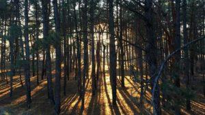 Сонце та зелень: як виглядала Хортиця цими вихідними, — ФОТО
