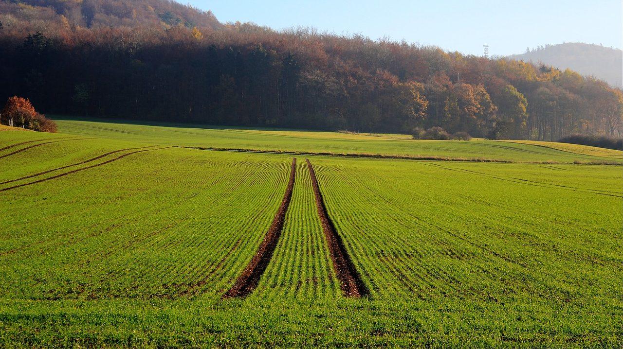 В Запорожье в коммунальную собственность вернули участок земли стоимостью более 65 миллионов гривен
