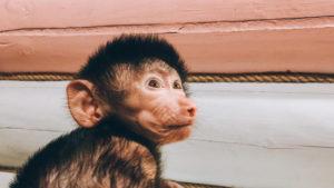 Работники зоопарка в Запорожской области показали новорожденную обезьянку, – ФОТО