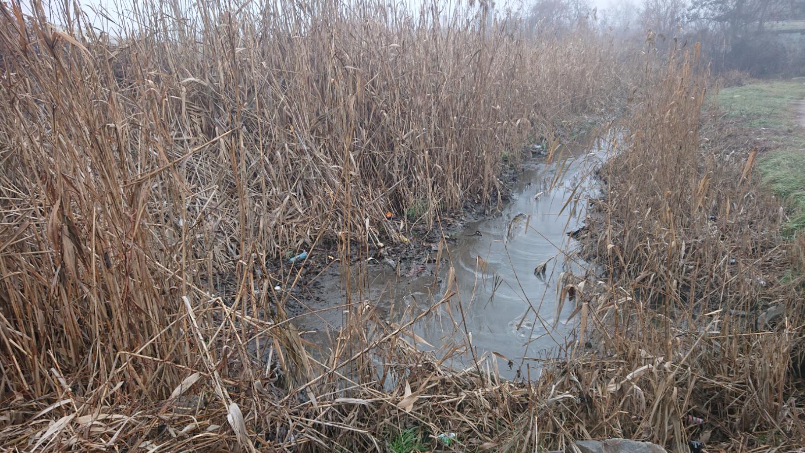 В Запорожье от мусора и камыша расчистят речку в Южном микрорайоне, – ФОТО