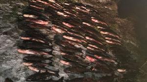 На Запоріжжі викрили браконьєра, який виловив 350 кілограмів риби на 30 тисяч гривень, – ФОТО