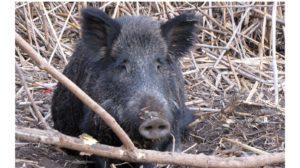 На Хортице нашли несколько трупов диких животных, которые попали в браконьерские ловушки