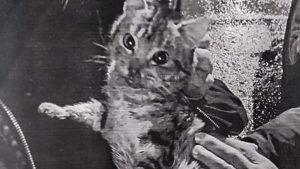 У Запорізькій області поліція затримала живодера, який знущався над тваринами, – ФОТО