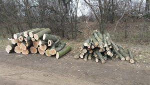 В Запорожской области полицейские остановили незаконную вырубку сосен, – ФОТО