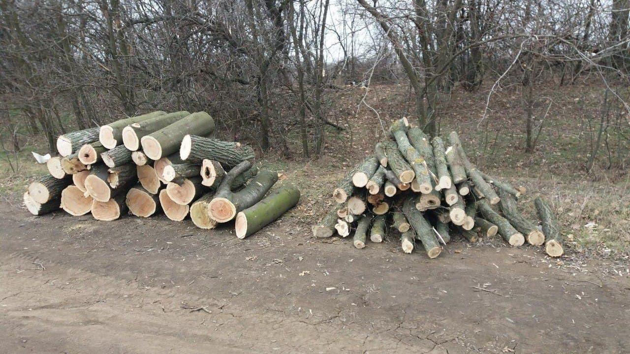 В Запорожской области полицейские остановили незаконную вырубку лесонасаждений, – ФОТО