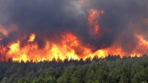 До 20 тисяч за лісову пожежу: Верховна Рада підняла штрафи паліям екосистем