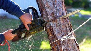 Жителя Запорожской области будут судить за незаконную вырубку деревьев