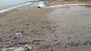 В Бердянську з невідомих причин узбережжя всіяне мертвим бичком, — ФОТО