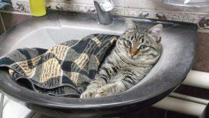 За деякими адресами в Запоріжжі днями відключать холодну воду