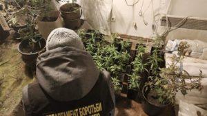 У жителя Запоріжжя знайшли міні-теплицю з вирощування наркотичних речовин, – ФОТО