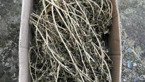 У Запорізькій області поліція виїхала на виклик про сімейну сварку і знайшла кілограм наркотиків, – ФОТО