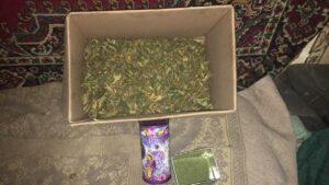 У жителя Запорізької області знайшли наркотиків на суму понад 35 тисяч гривень