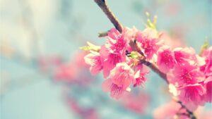 Начало весны: в запорожском ботаническом саду на две недели раньше расцвела сакура, — ФОТО
