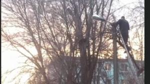 В Запоріжжі пожежники врятували вуличного кота, який застряг на дереві, — ВІДЕО