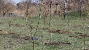 Предприятия Метинвест и Зеленый центр Метинвест высадили в Запорожье 400 деревьев, – ФОТОРЕПОРТАЖ