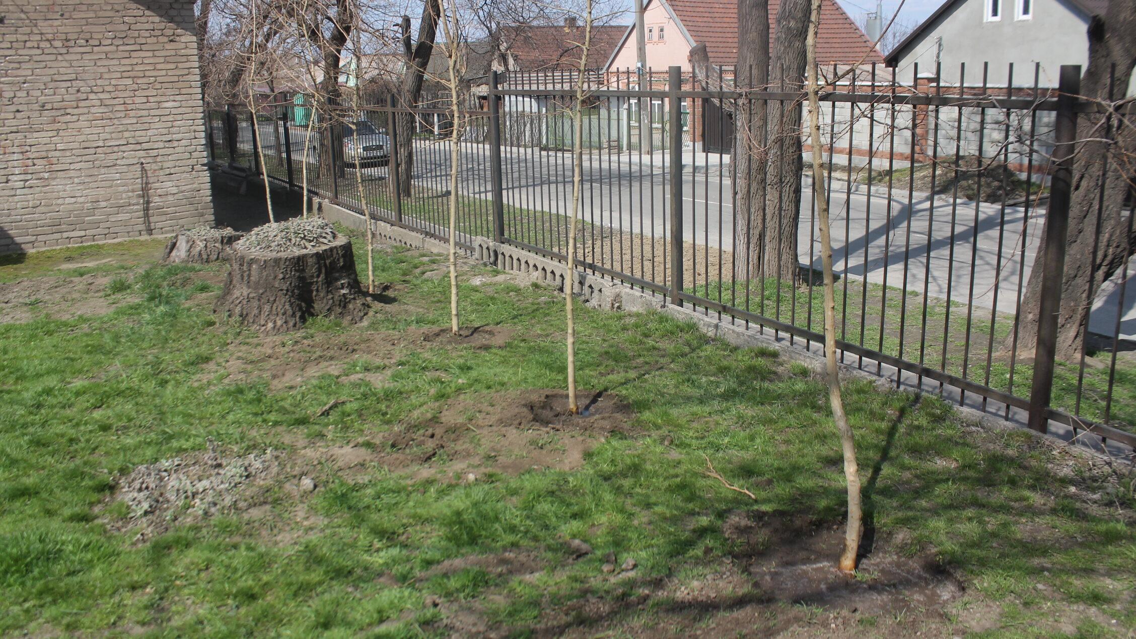 В Заводском районе Запорожья в школе-интернате высадили новую кленовую аллею, – ФОТОРЕПОРТАЖ
