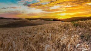 Запорожский производитель техники для аграриев получил патент США