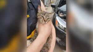 Усатая путешественница: кошка залезла под капот авто и доехала из Бердянска в Днепр, — ФОТО
