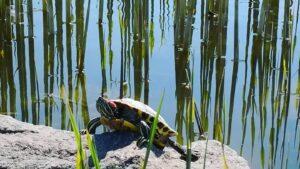 Весеннее Запорожье: в Вознесеновском парке на солнце вылезли черепахи, — ФОТО