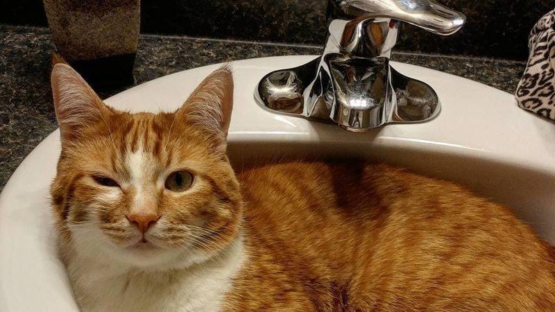 В Запорожье из-за ремонтных работ отключат воду, — АДРЕСА