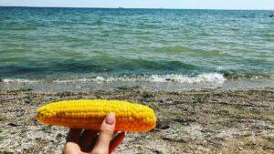 На курортах Запорізької області кукурудзу продають за небюджетну ціну
