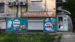 В Запоріжжі відкриють перше у місті котокафе: що це таке