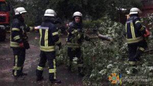 В Запорожье из-за непогоды на автомобили и дороги упало 6 деревьев, – ФОТО