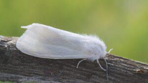 На Запорожье насекомое убивает урожай: введены карантинные меры