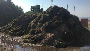 Тепер не лише медузи: пляжі Бердянська завалило тоннами водоростей, – ФОТО, ВІДЕО