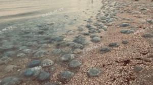 На запорізькому курорті після шторму узбережжя кишить медузами, - ВІДЕО