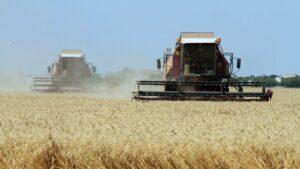 На Запоріжжі готуються зібрати рекордний врожай зернових