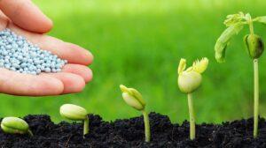 Где и как выбрать качественные удобрения для растений?