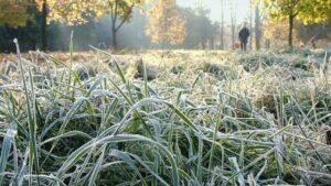 У Запоріжжі очікуються перші заморозки
