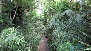 Ботанічний сад в Запоріжжі зачинили